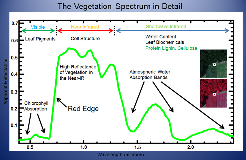 Vegetation Spectrum, ENVI